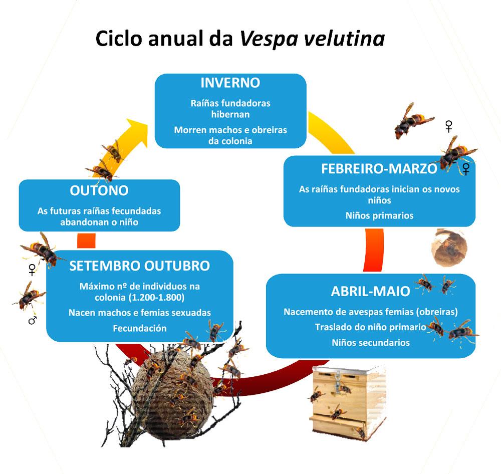 O Concello organiza unha charla sobre a vespa velutina