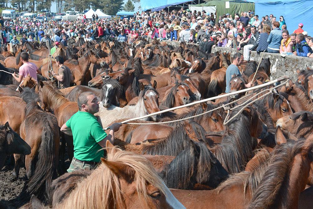 A tempada de curros en Oia comeza este domingo na Valga